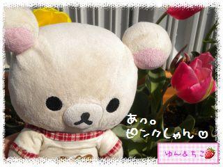 ちこちゃんのチューリップ観察日記★26★ピンクしゃん-2