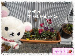 ちこちゃんの観察日記★29★花びらしゃんが・・・再び-2