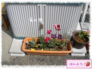 ちこちゃんの観察日記★29★花びらしゃんが・・・再び-3