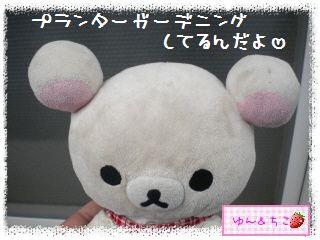ちこちゃんのプランターガーデニング日記★1★-1