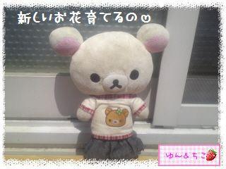 ちこちゃんのプランターガーデニング日記★2★-1