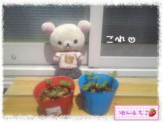 ちこちゃんのプランターガーデニング日記★2★-2