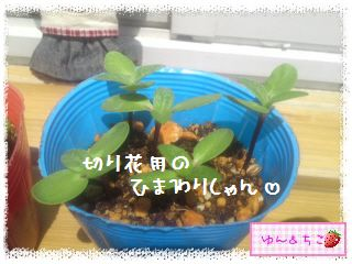 ちこちゃんのプランターガーデニング日記★2★-3