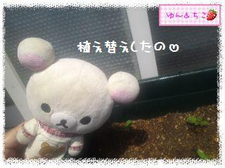 ちこちゃんのプランターガーデニング日記★2★-4