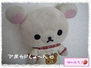 ちこちゃんのアボカド観察日記★14★どうしよう・・・-1