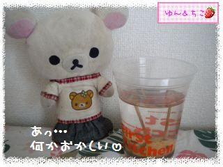 ちこちゃんのアボカド観察日記★14★どうしよう・・・-2