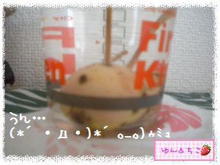 ちこちゃんのアボカド観察日記★14★どうしよう・・・-3