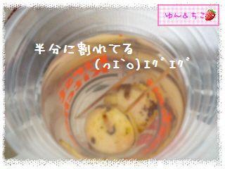 ちこちゃんのアボカド観察日記★14★どうしよう・・・-4