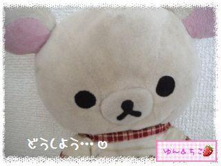 ちこちゃんのアボカド観察日記★14★どうしよう・・・-5