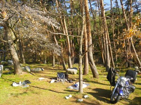 御座松キャンプ場 2013 サイト 朝