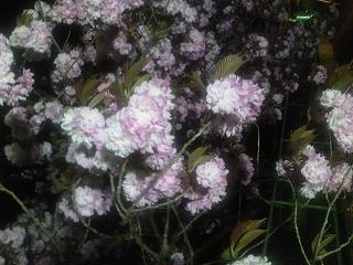 須坂温泉古城荘に咲く