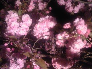 須坂温泉古城荘に咲く2