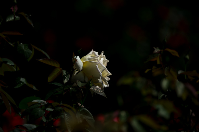 20130531-D3S_4163.jpg
