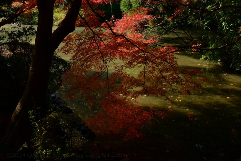 2014年秋・京都