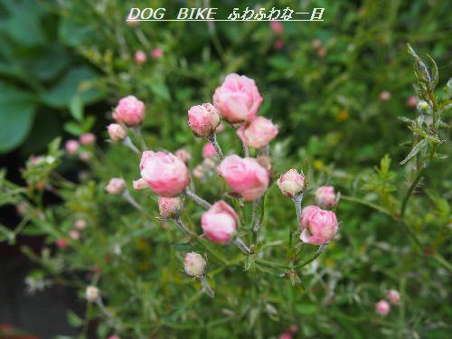 P5230626.jpg