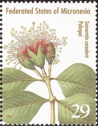 植物ぶつぶつダイアリー ハマザクロ科