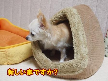 blog4620a.jpg