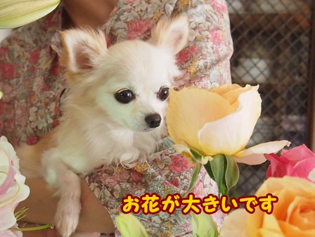 blog4678a.jpg