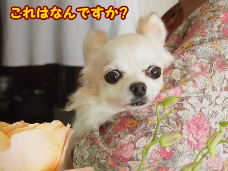 blog4682a.jpg