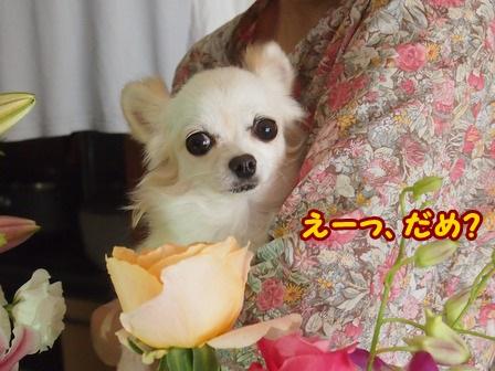 blog4688a.jpg