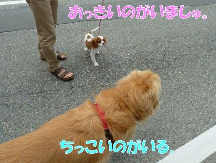 20130609-2.jpg