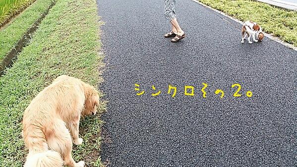fc2_2013-09-09_22-42-46-352.jpg