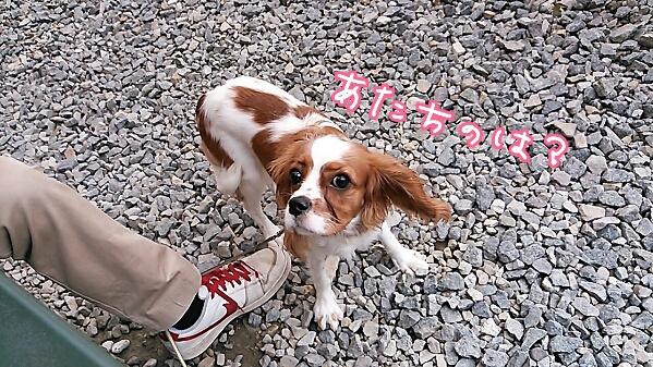 fc2_2013-11-05_18-01-16-278.jpg