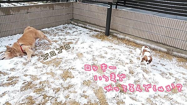 fc2_2014-01-20_22-44-20-866.jpg