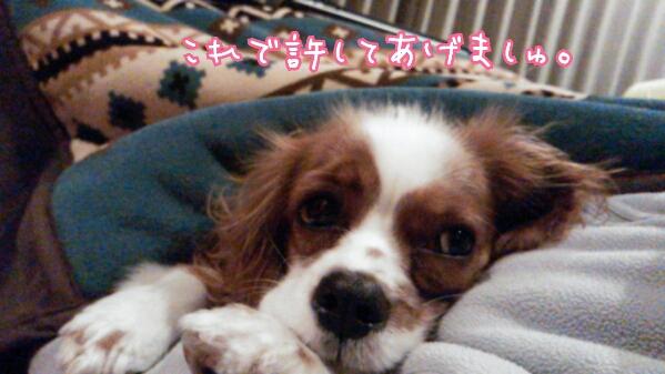 fc2_2014-02-11_22-10-19-395.jpg