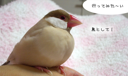 鳥関係&びっくり映像_1
