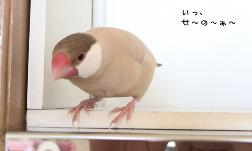 野生の鳥の厳しさ_2