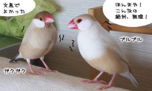 野生の鳥の厳しさ_1