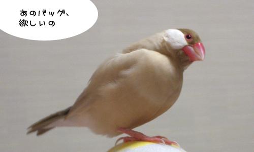 鳥モチーフ_1