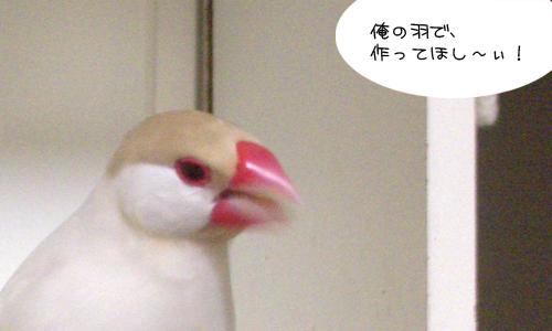 きれいな鳥の作品_1