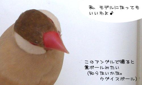 きれいな鳥の作品_2