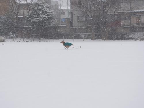 大雪走る1