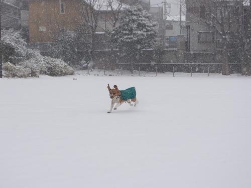 大雪走る2