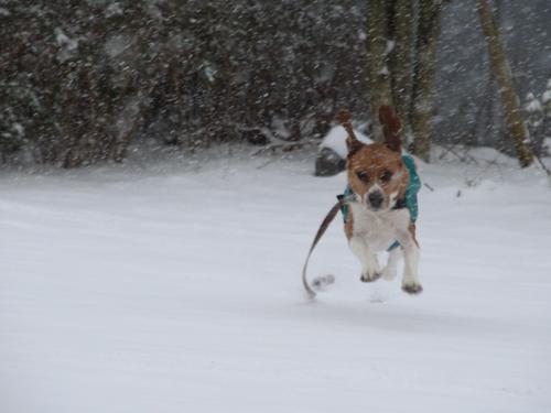 大雪走る3