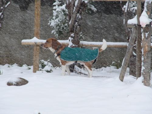 大雪走る4