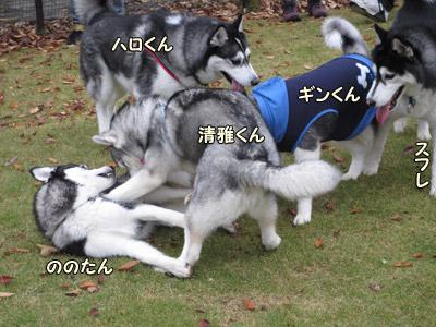 マイペース・ギンちゃん