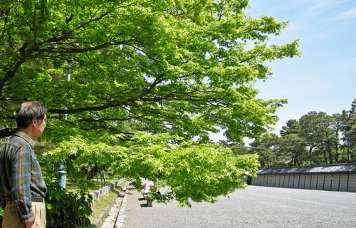 momiji69.jpg