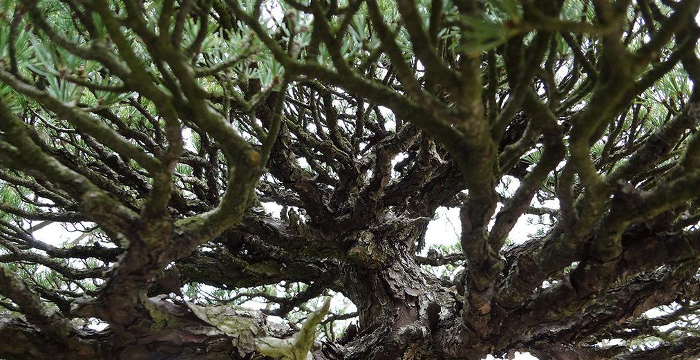 vast_tree.jpg