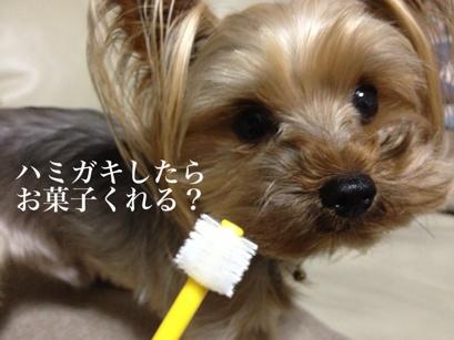 fc2blog_20130630164731e3a.jpg