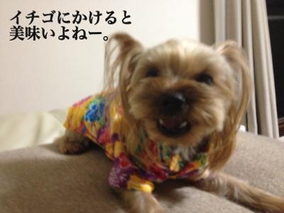 fc2blog_20130725203913ab7.jpg