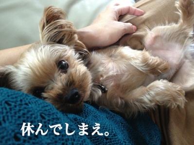 fc2blog_20130905072419b8c.jpg
