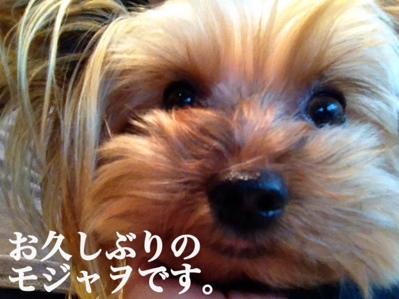 fc2blog_20131022161226e5e.jpg