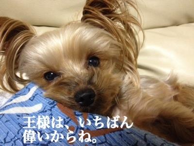 fc2blog_20140121234013263.jpg