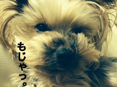 fc2blog_201401242308432b2.jpg