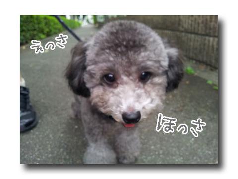 blog_import_520983b206321.jpg