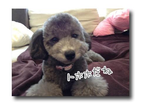 blog_import_5209847aca685.jpg